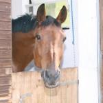 Schwaerzloch-Bauernhof-Pferde-01