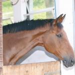 Schwaerzloch-Bauernhof-Pferde-02