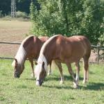 Schwaerzloch-Bauernhof-Pferde-03
