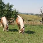 Schwaerzloch-Bauernhof-Pferde-04