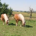 Schwaerzloch-Bauernhof-Pferde-05