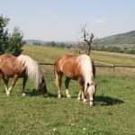 Schwaerzloch-Bauernhof-Pferde-07