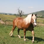 Schwaerzloch-Bauernhof-Pferde-08